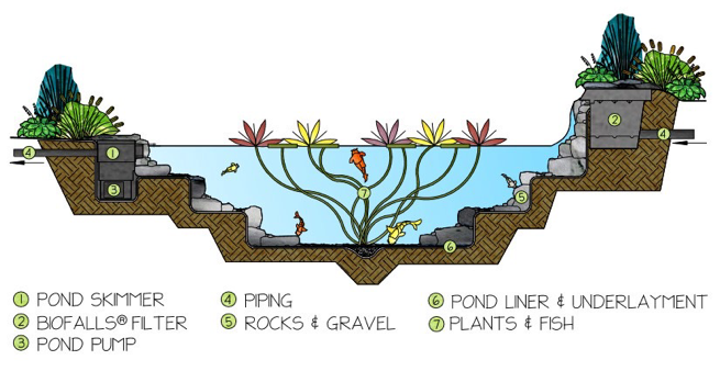 eco-pond-1